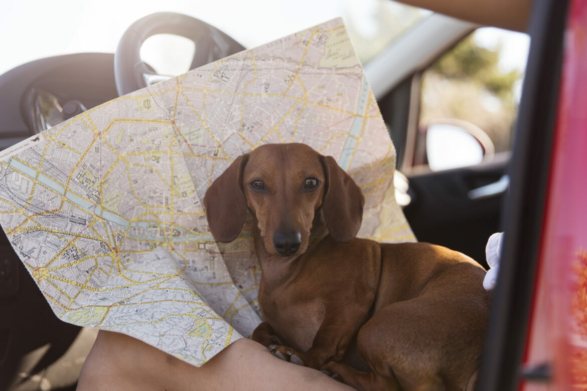 close-up-traveler-with-cute-dog-map