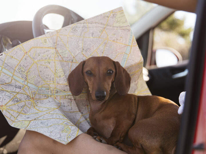 Get your documents in order for travel with pet!